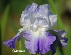 GUIDE D'IDENTIFICATION : les IRIS  Claren10