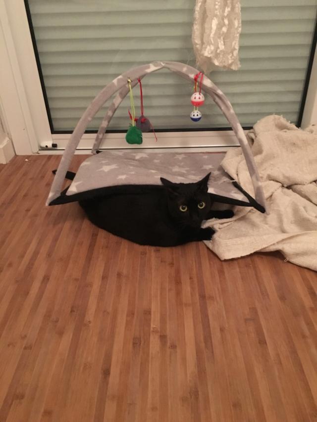 LYNN, chatte noire née en 2015 10092510