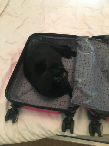 LYNN, chatte noire née en 2015 33689110