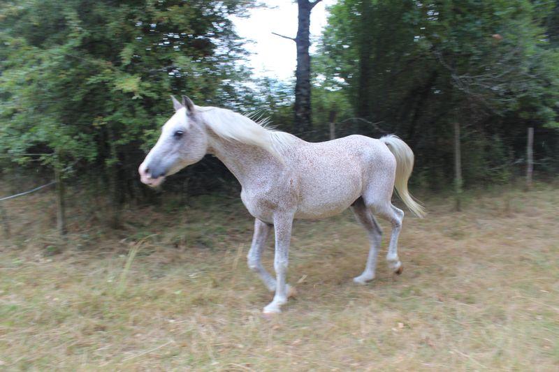 EXIT - PSAr né en 1993 - adopté en septembre 2016 par Annie et Jean-Pierre Img_3021