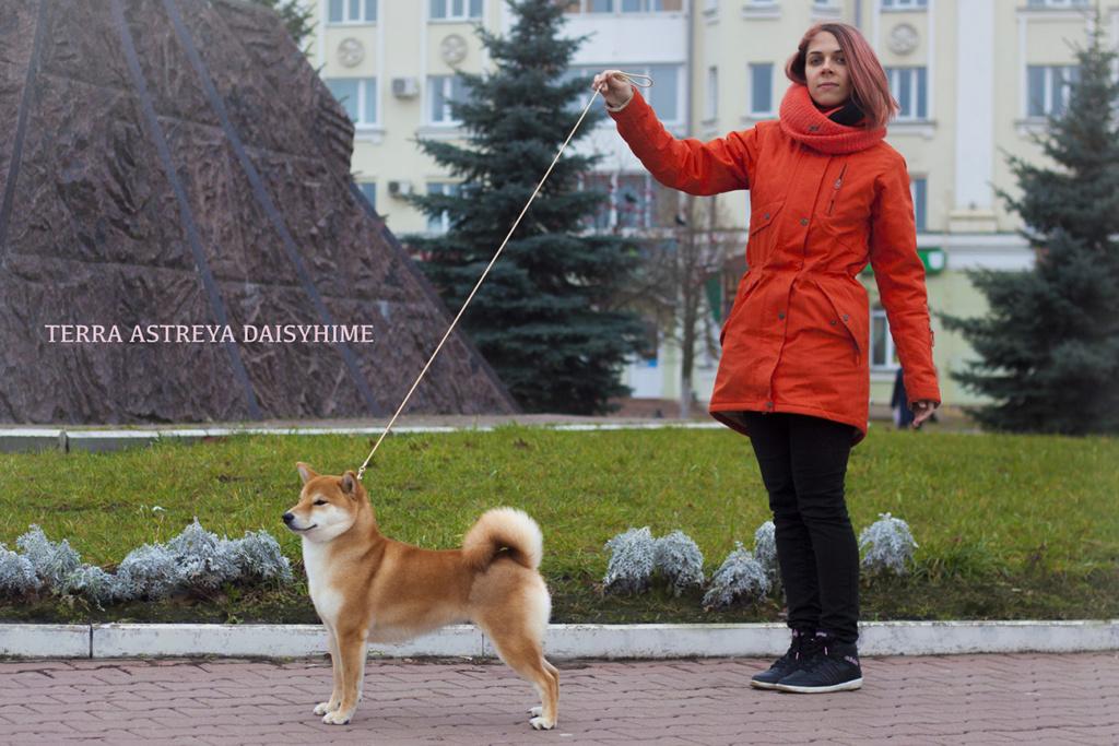 Питомник DELEN SOLAR - Рыжие щенки от пары KATSURO NAKAMA и TERRA ASTREYA DAISYHIME 111