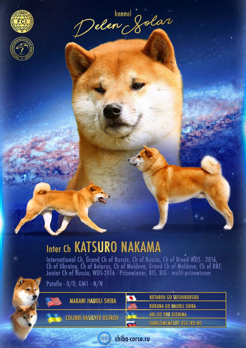 Питомник DELEN SOLAR - Рыжие щенки от пары KATSURO NAKAMA и TERRA ASTREYA DAISYHIME A10