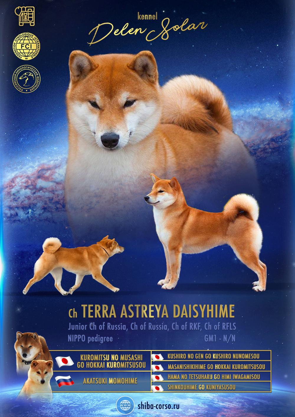 Питомник DELEN SOLAR - Рыжие щенки от пары KATSURO NAKAMA и TERRA ASTREYA DAISYHIME A11
