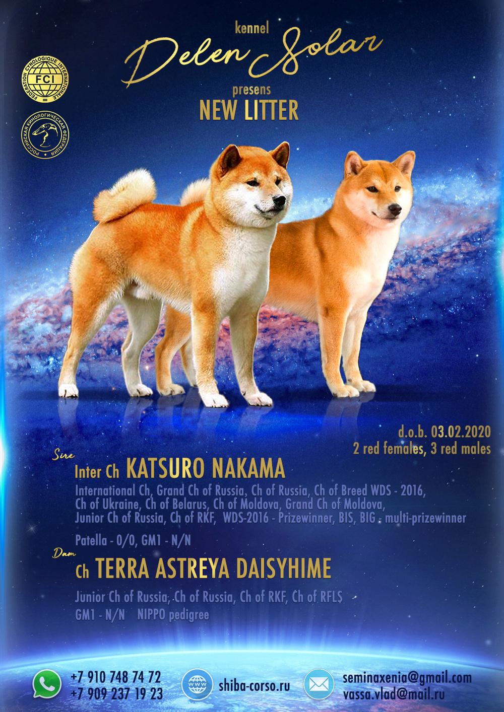 Питомник DELEN SOLAR - Рыжие щенки от пары KATSURO NAKAMA и TERRA ASTREYA DAISYHIME Untitl17