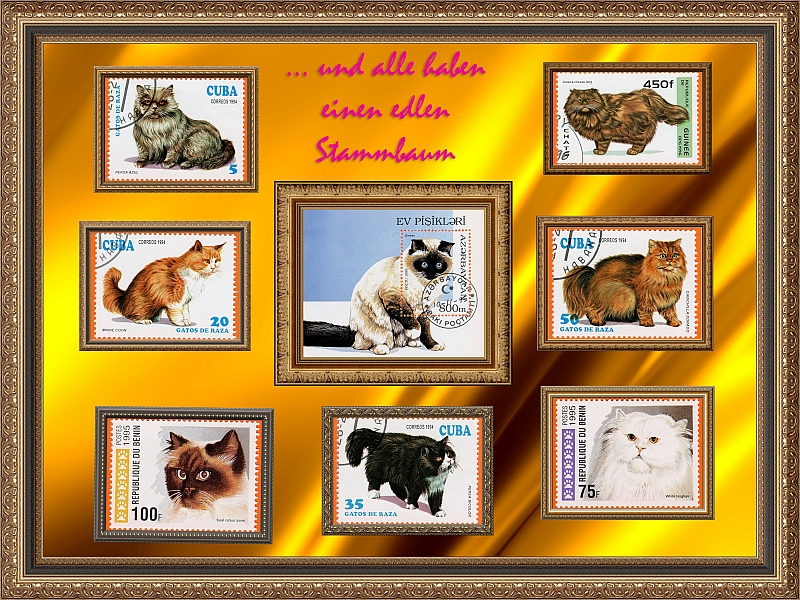Katzen - Seite 2 Kat_1210