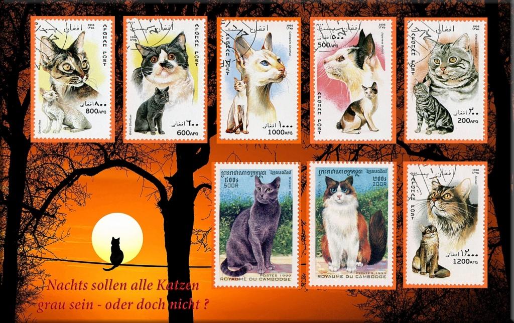 Katzen - Seite 2 Katzen11