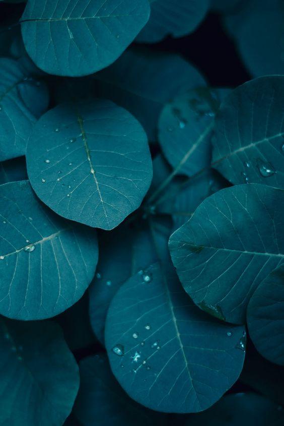 [Jeu] photographies : Quelle couleur êtes vous ? - Page 3 01022710