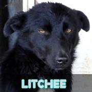 LITCHEE !! + de 4 ans de box !! mâle, taille moyenne, né en juin 2014 - REMEMBER ME LAND - Page 3 Litche10