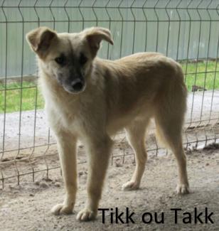 TIKK !! + de 3 ans de box !! mâle, croisé, né en septembre 2015 - REMEMBER ME LAND - Page 2 Takk10