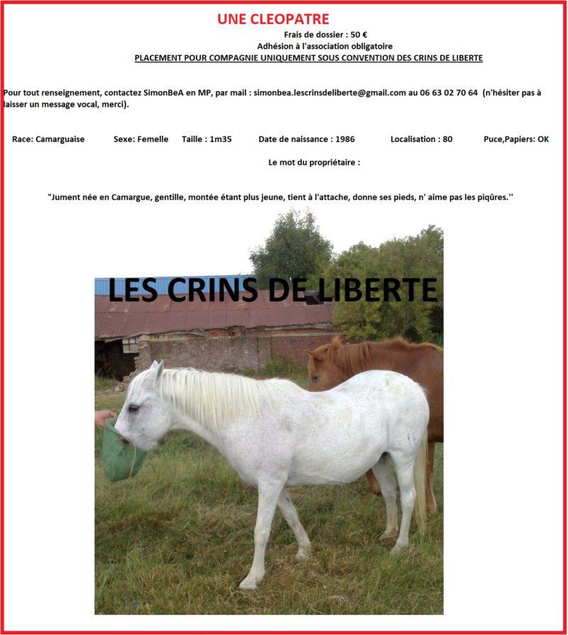 Dept 80 - IRPA VON HEYBUHL & UNE CLEOPATRE  - poneys - sauvées par Mickael  Fiche_15