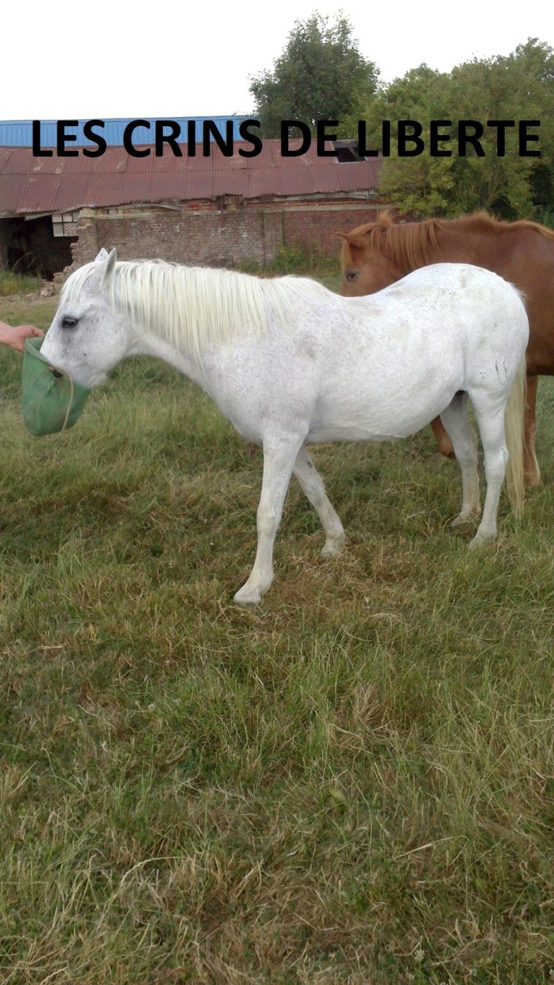 Dept 80 - IRPA VON HEYBUHL & UNE CLEOPATRE  - poneys - sauvées par Mickael  Une_cl10