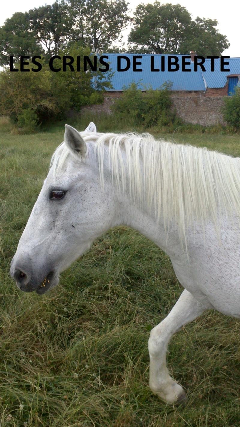 Dept 80 - IRPA VON HEYBUHL & UNE CLEOPATRE  - poneys - sauvées par Mickael  Une_cl11