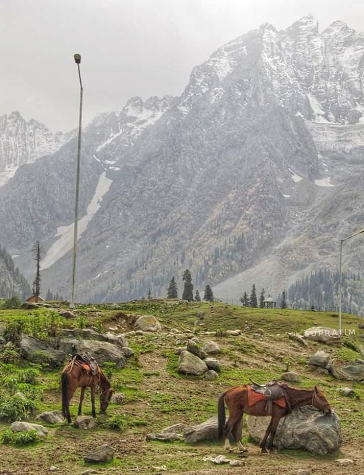 কাশ্মীর ভ্রমন Kashmir Tour  Fb_im107