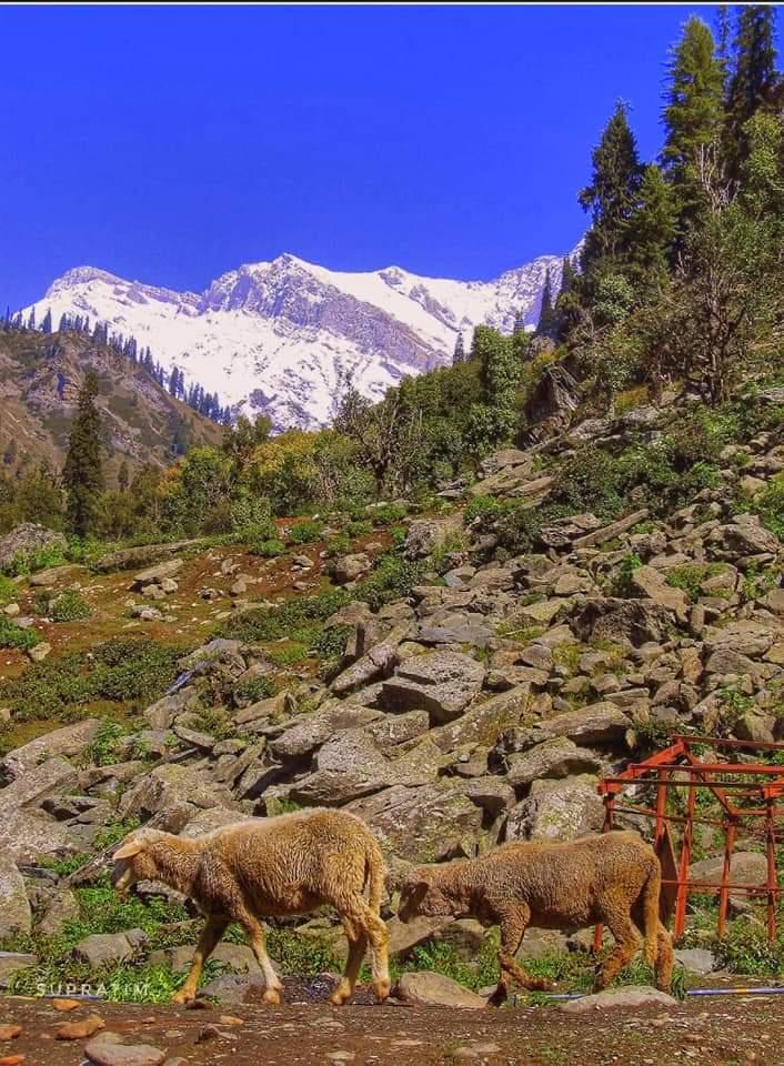 কাশ্মীর ভ্রমন Kashmir Tour  Fb_im113