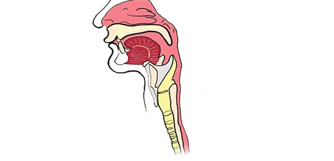 التهاب البلعوم (Pharyngitis) B9309710