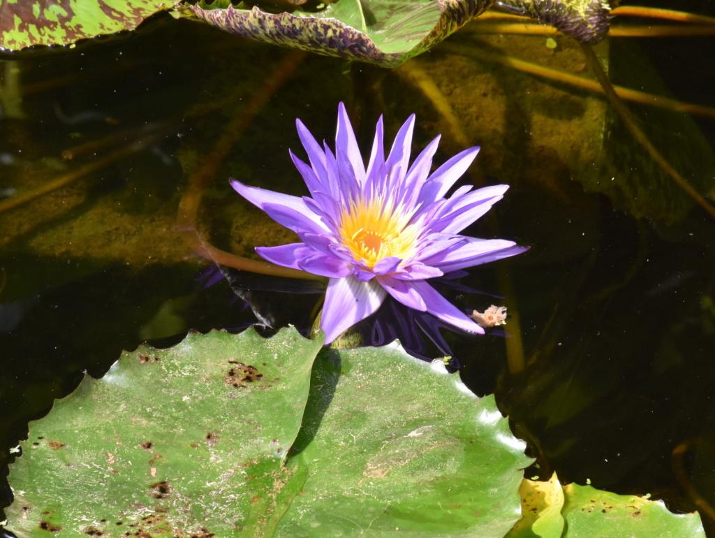 [Fil ouvert] Fleurs et plantes - Page 10 Dsc_0415