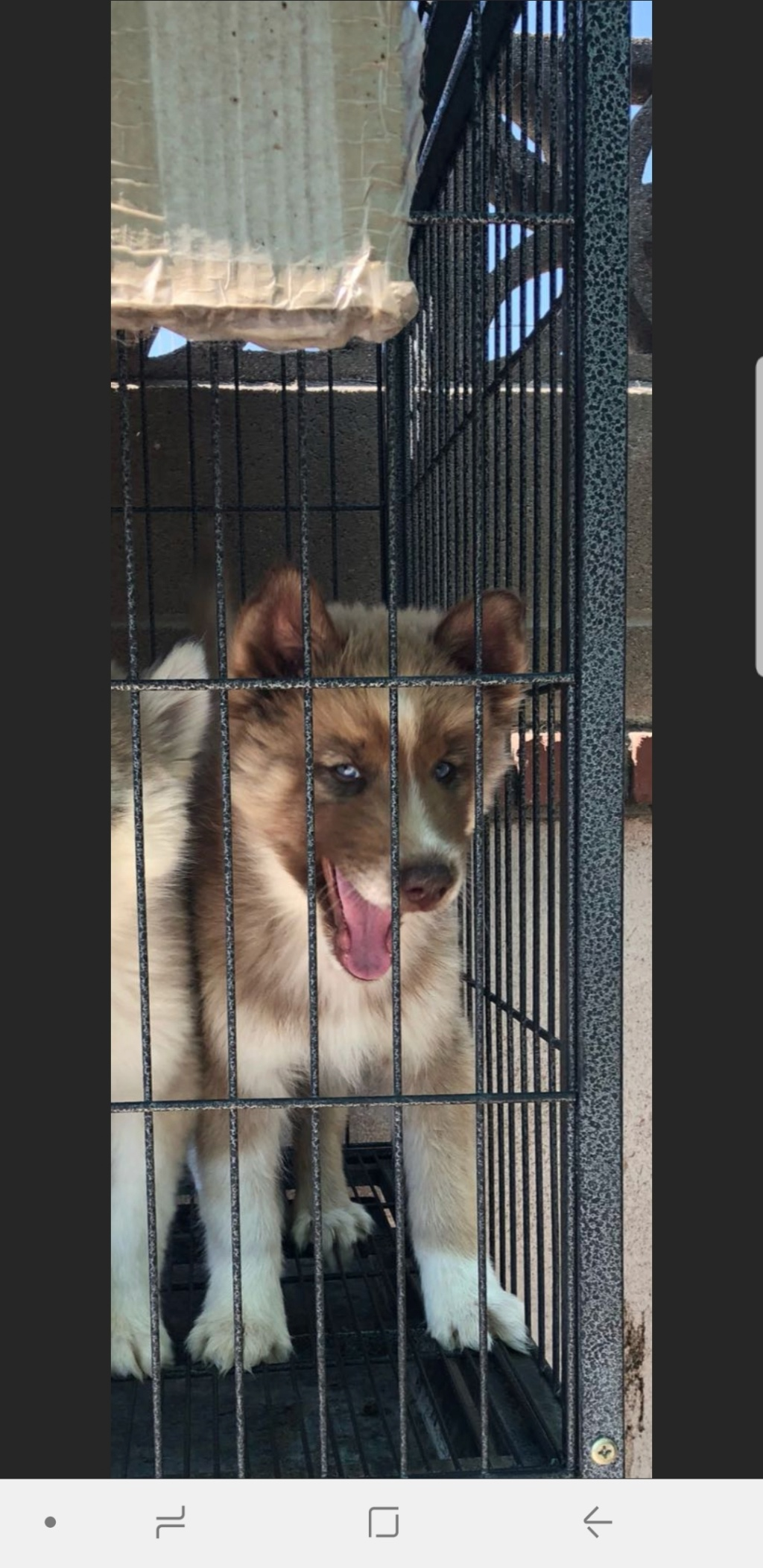 What is the color of this pup? Screen19