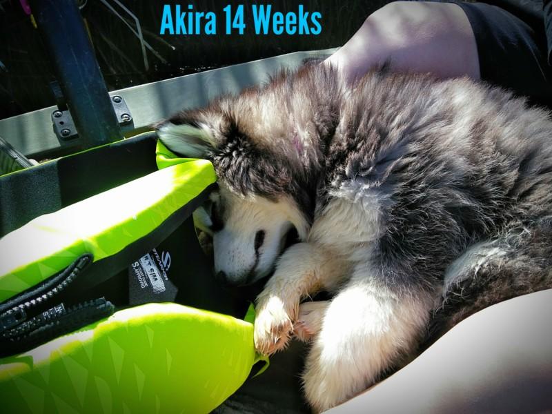 52 Weeks of Akira! <3 20190414
