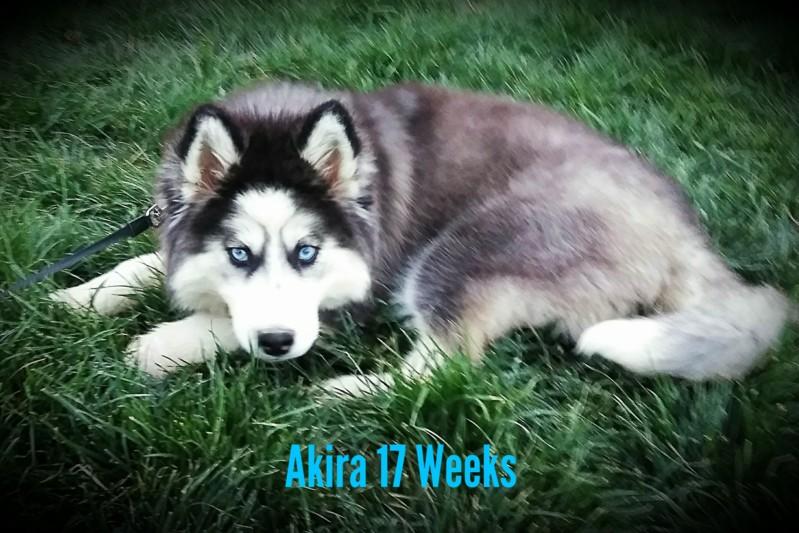 52 Weeks of Akira! <3 20190425