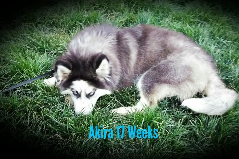 52 Weeks of Akira! <3 20190427
