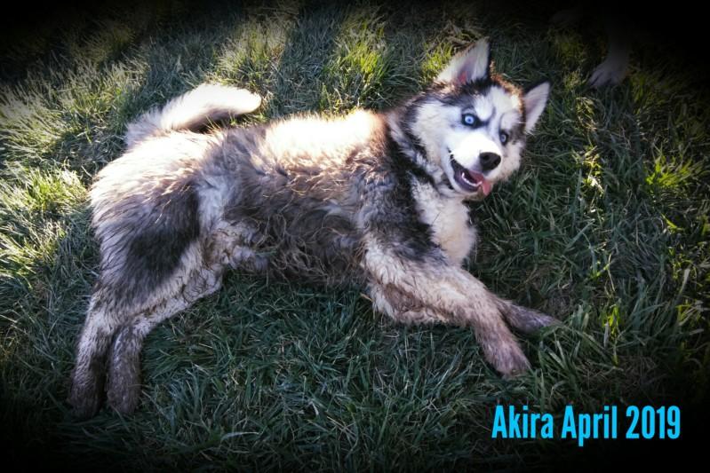 52 Weeks of Akira! <3 20190434