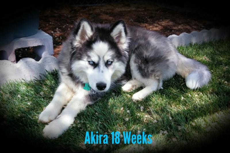 52 Weeks of Akira! <3 20190435