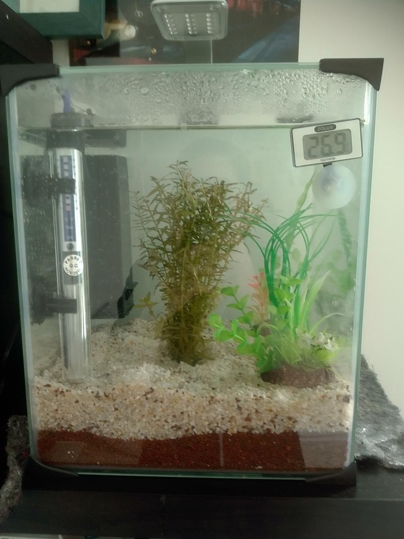 nano aquarium killi cap lopez Img_2132