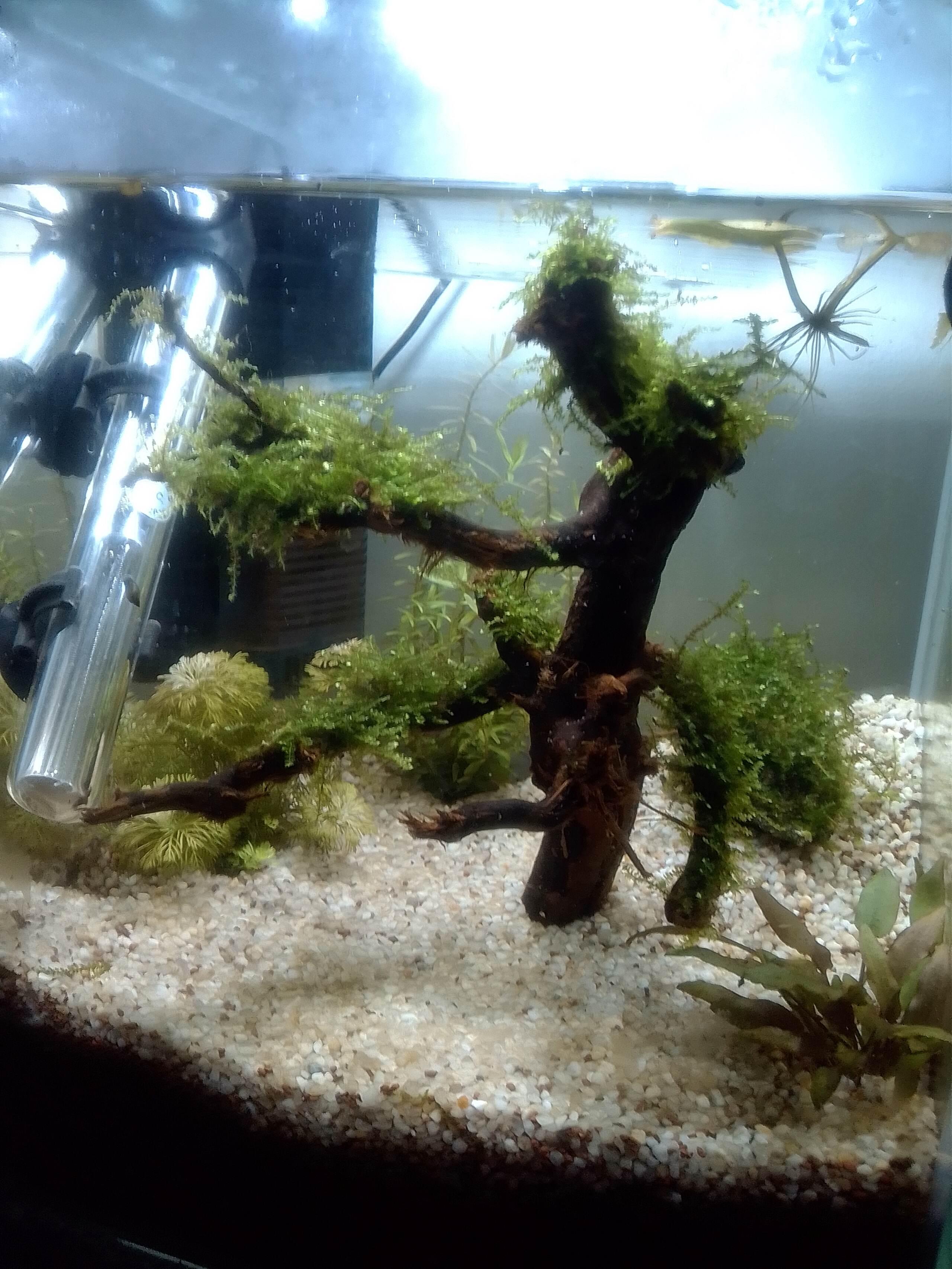nano aquarium killi cap lopez Img_2188