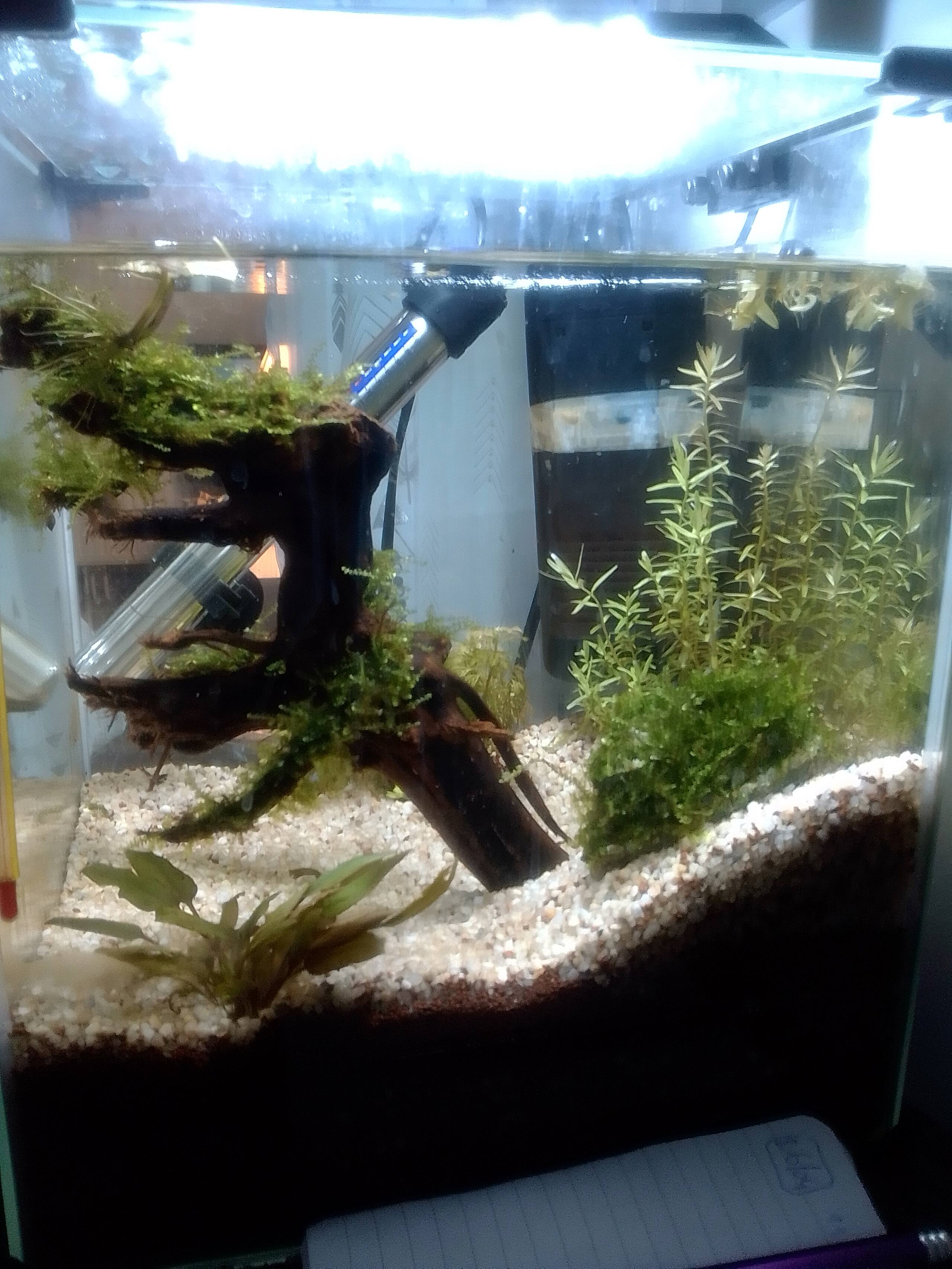 nano aquarium killi cap lopez Img_2189
