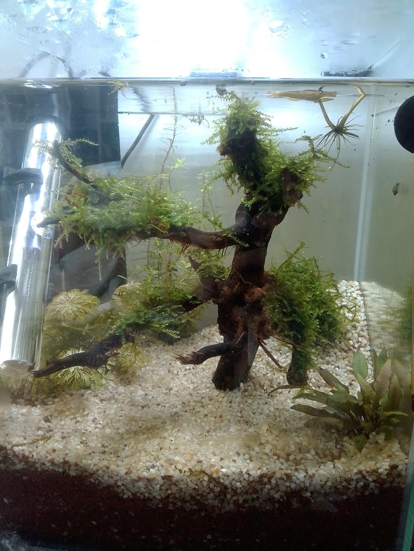 nano aquarium killi cap lopez Img_2197
