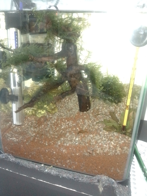 nano aquarium killi cap lopez Img_2215