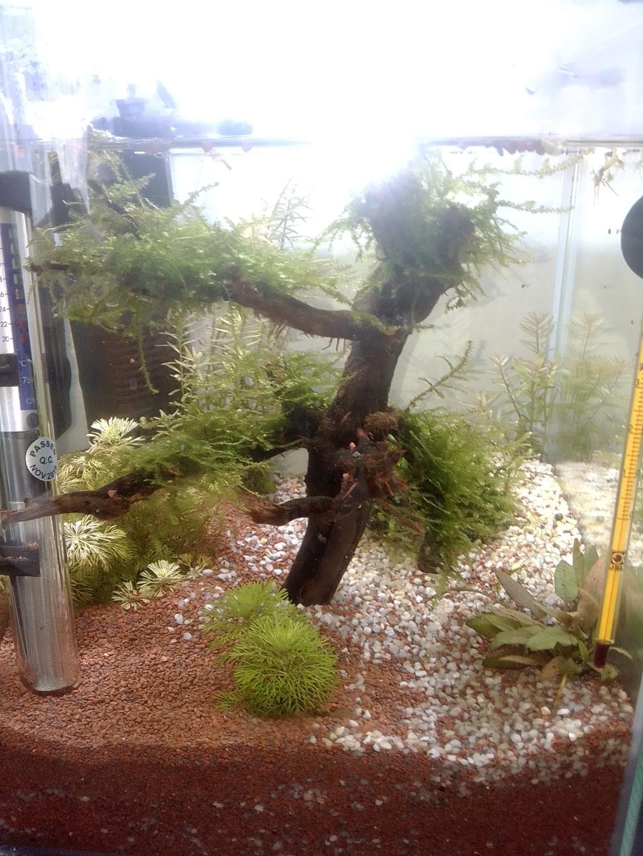 nano aquarium killi cap lopez Img_2223