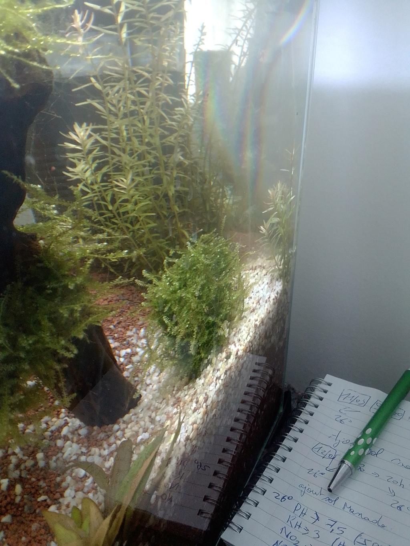 nano aquarium killi cap lopez Img_2224