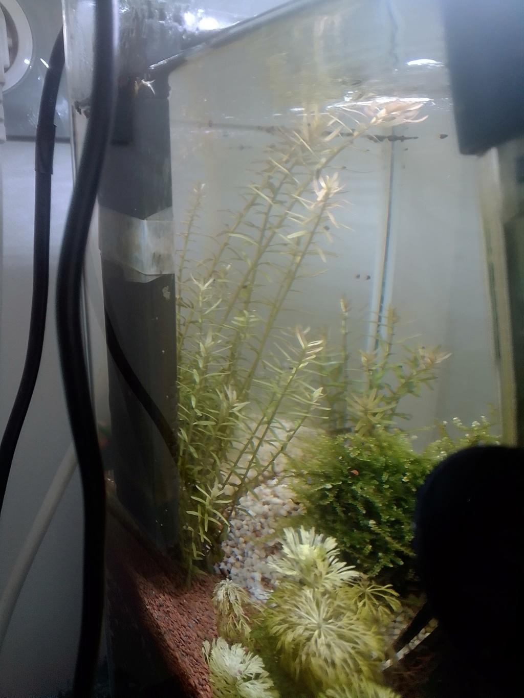 nano aquarium killi cap lopez Img_2225