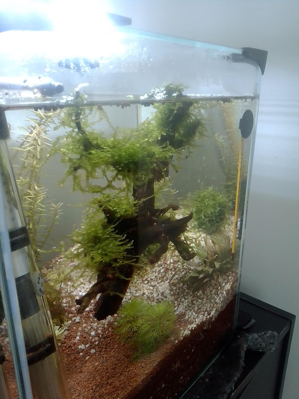 nano aquarium killi cap lopez Img_2227
