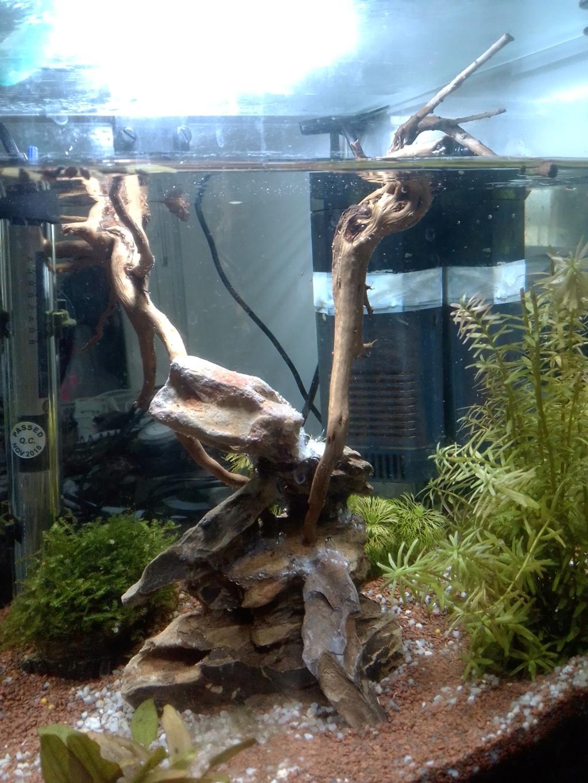 Nano aquariium combattant - Page 2 Img_2235