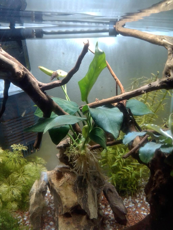 Nano aquariium combattant - Page 2 Img_2251