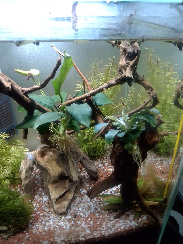 Nano aquariium combattant - Page 2 Img_2252