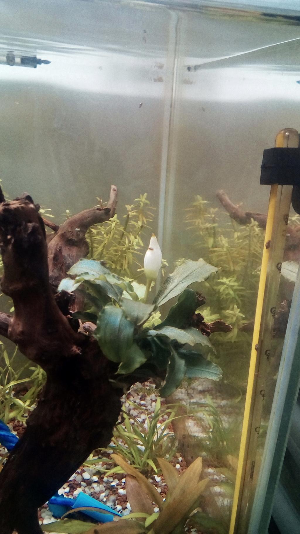 nano aquarium killi cap lopez - Page 2 Img_2268