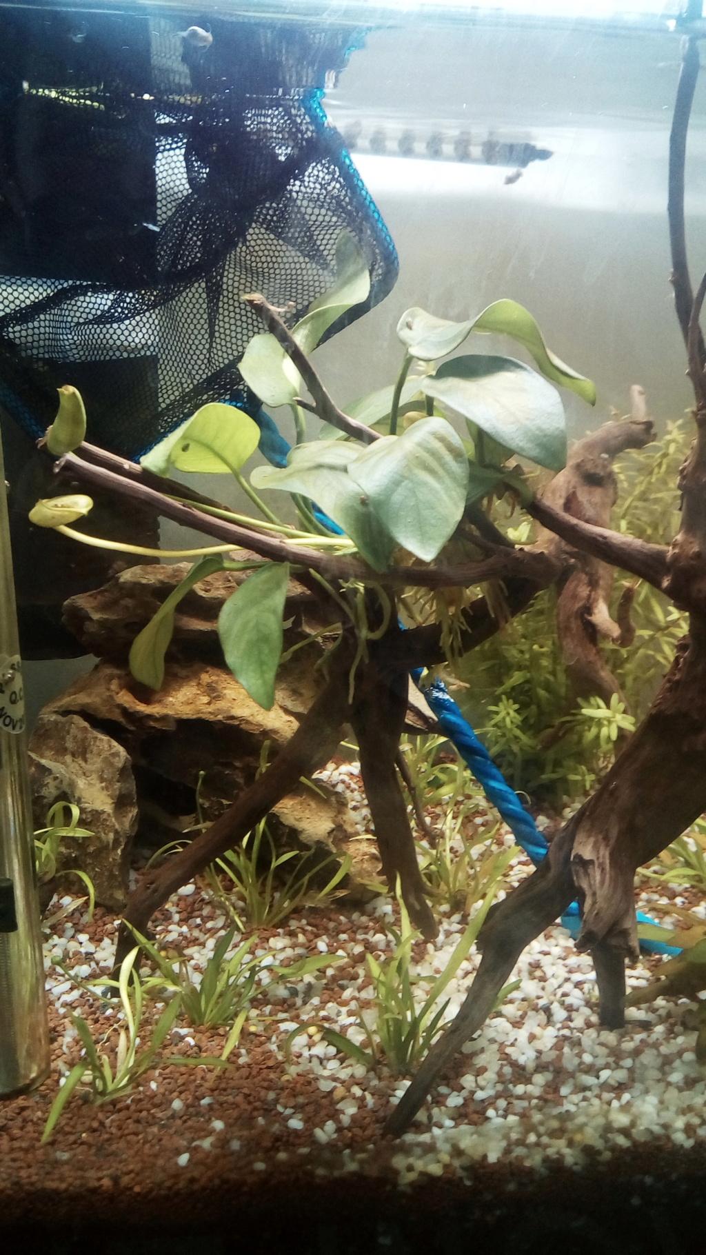 nano aquarium killi cap lopez - Page 2 Img_2270