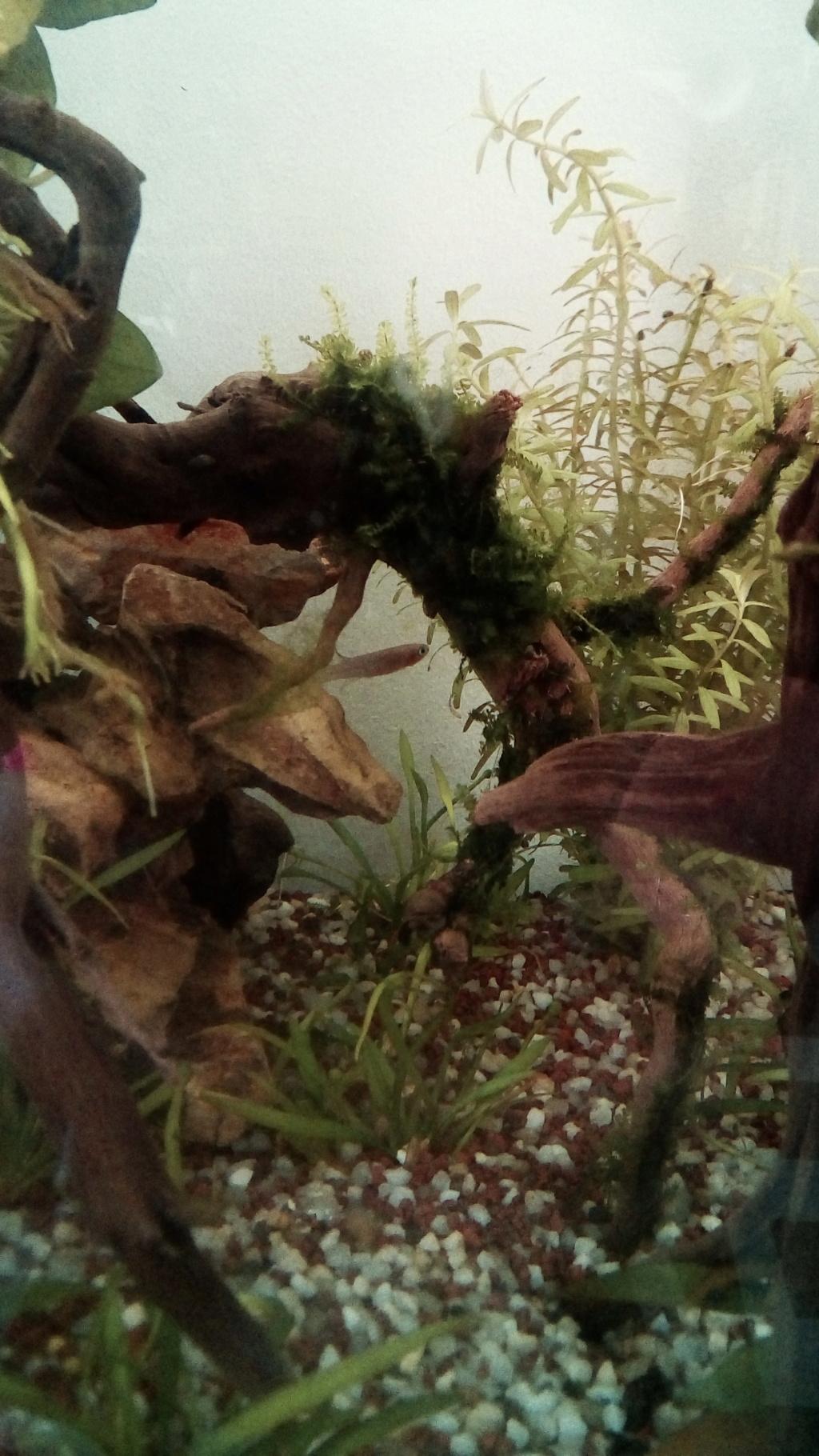 nano aquarium killi cap lopez - Page 3 Img_2282