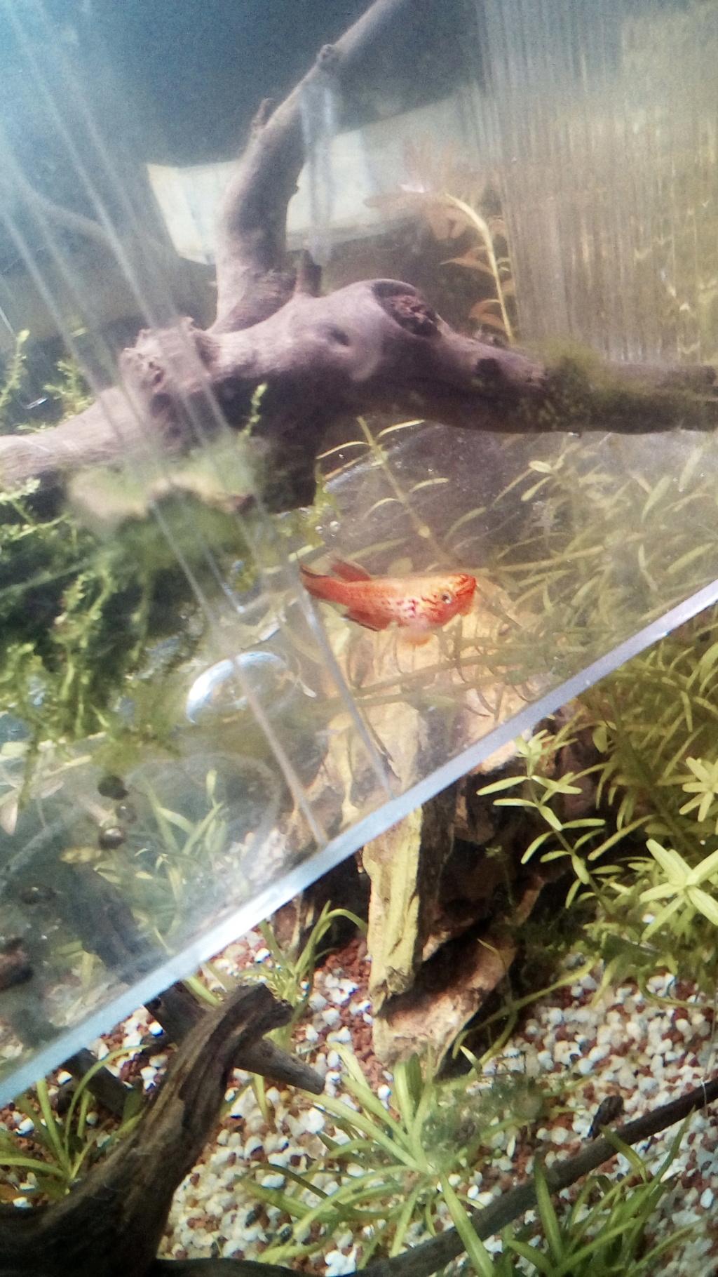 nano aquarium killi cap lopez - Page 3 Img_2295