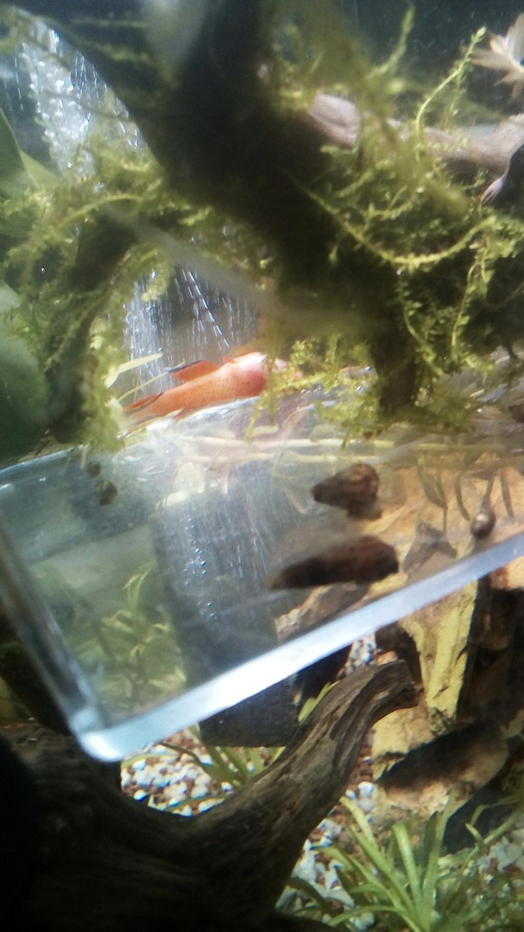 nano aquarium killi cap lopez - Page 3 Img_2297