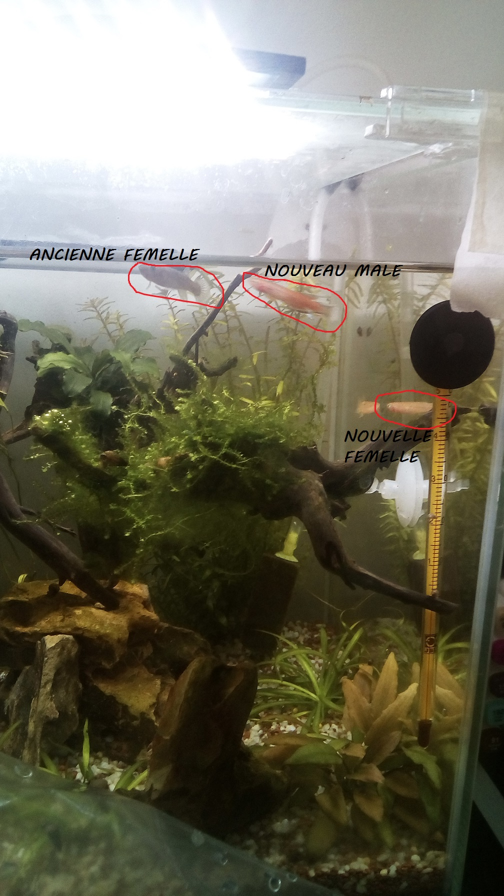 nano aquarium killi cap lopez - Page 3 Img_2298