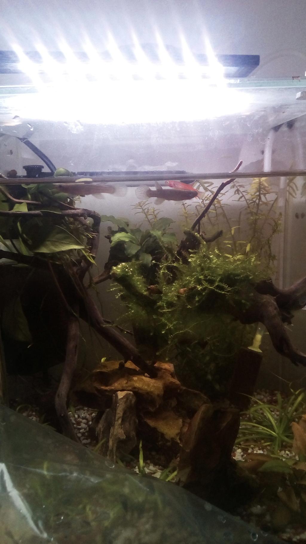nano aquarium killi cap lopez - Page 3 Img_2299