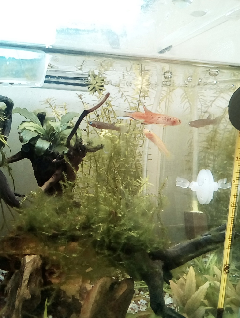 nano aquarium killi cap lopez - Page 4 Img_2300
