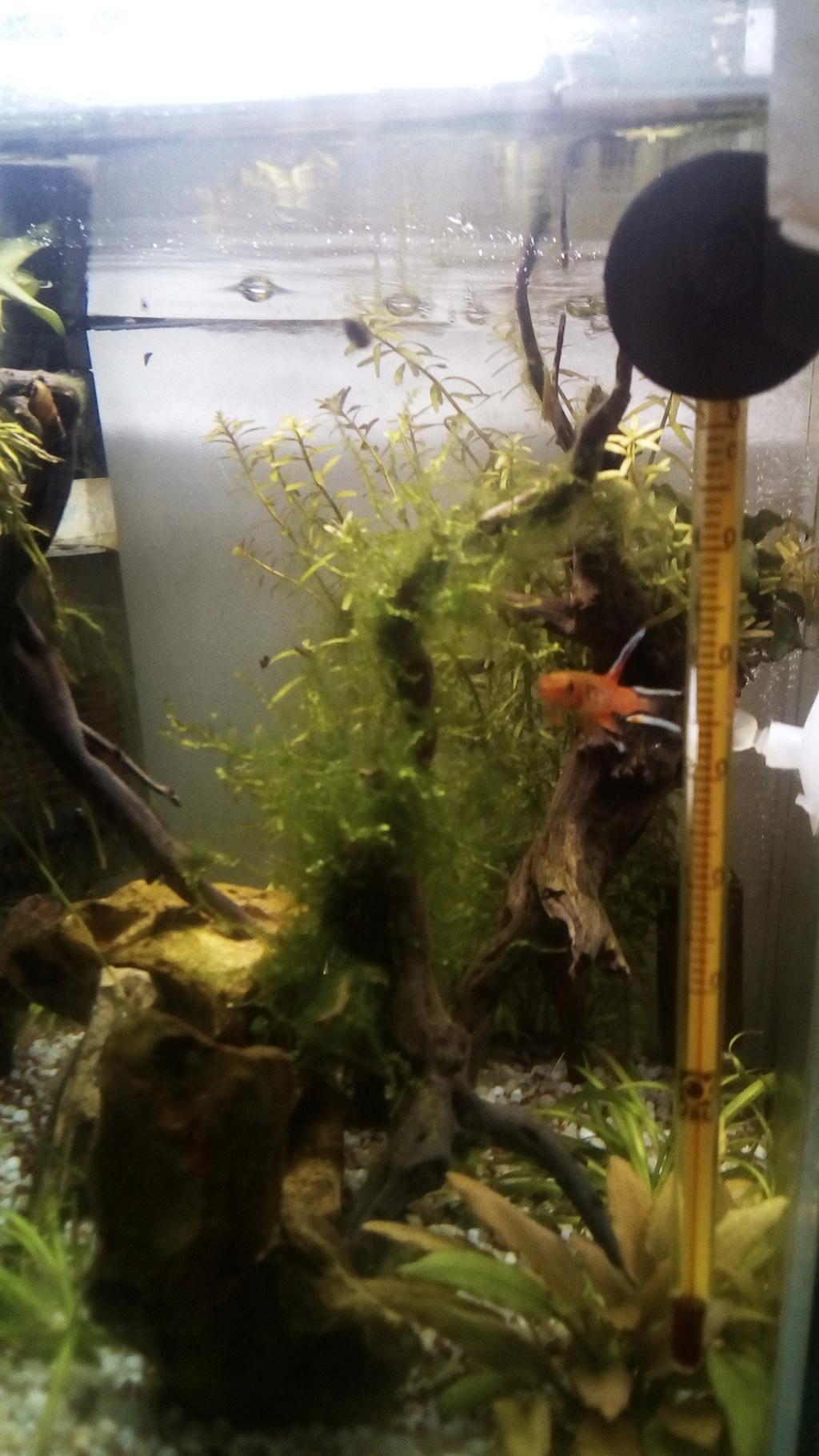 nano aquarium killi cap lopez - Page 4 Img_2303