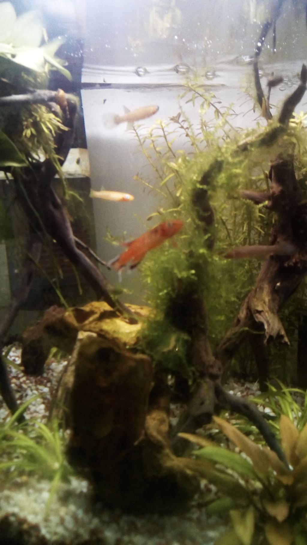 nano aquarium killi cap lopez - Page 4 Img_2305