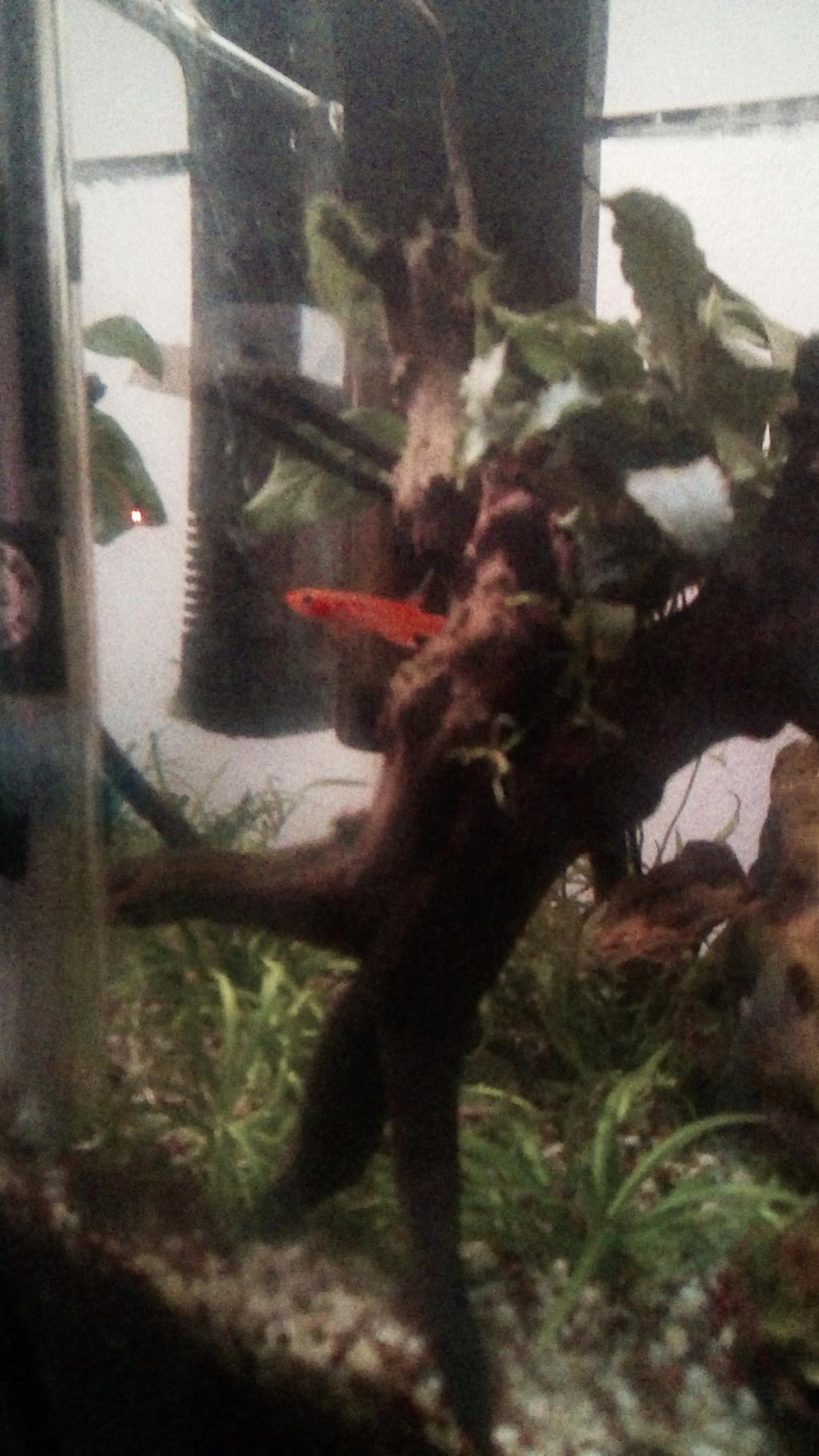 nano aquarium killi cap lopez - Page 4 Img_2308