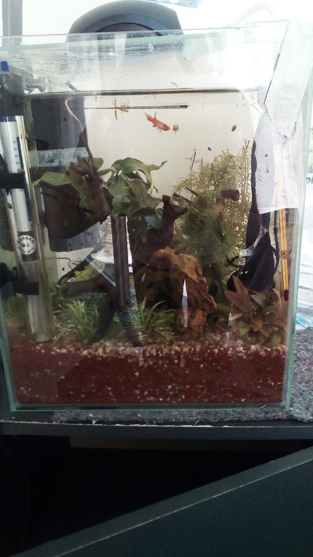 nano aquarium killi cap lopez - Page 4 Img_2309